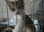 Cat_satooyakai11_3