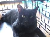 Cat_satooyakai12_2