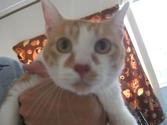 Cat_satooyakai15