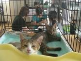 Cat_satooyakai3_2