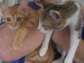 Cat_satooyakai9_3