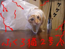 Buddy_fukuro