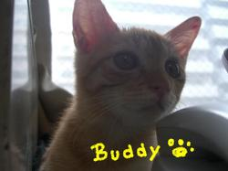 Buddy8_17_1