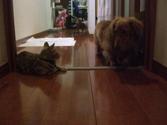 Ricky_cats3_2