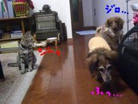 Ricky_cats6