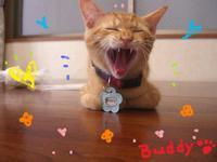 Buddy8_26_2