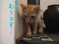 Tsuboneko2_9
