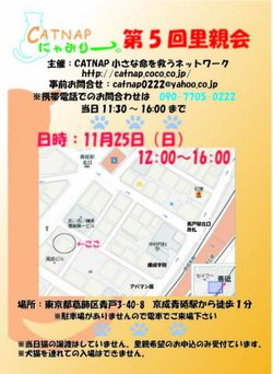 Satooyakai_cats1125