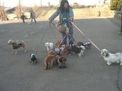 11dogs