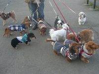 11dogs2