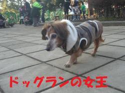Dogrun0106_4