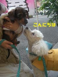 Basil_misa