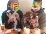 Panpan_lr8