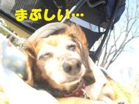 Hibiya0315_6