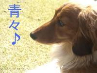 Kokyo0322_3_1
