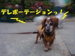 Lucy_tsutsuji1