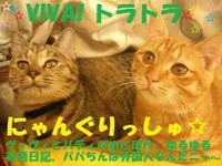 Vivi_buddy12140