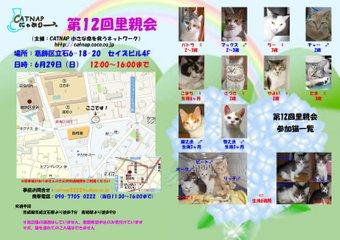 629catsatooyakai2