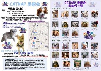 Catnapsatooyakai926