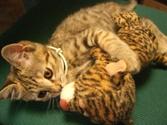 Catnap4