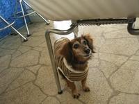Dogcafe2