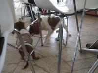 Dogcafe5