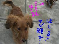 Lucy_ricky4_12_3