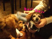Lucy_ricky4_4_3
