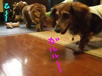 Lucy_ricky5_11_2