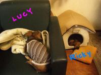 Lucy_ricky5_16_1