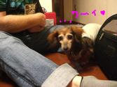 Lucy_ricky5_19_3