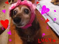 Lucy_sakura2