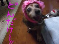 Lucy_sakura3