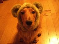 Ricky_bear2