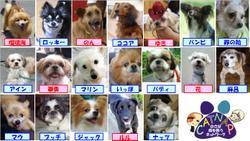 Satooyakai2_4
