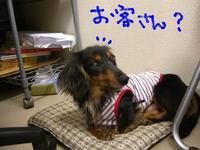 Tsubasa8_28_1