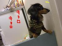 Tsubasa9_13_1