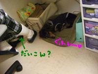 Tsubasa9_29_1_1