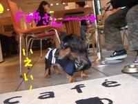 Tsubasa_cafe1