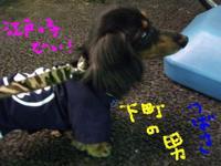 Tsubasa_matsuri2