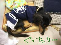 Tsubasa_matsuri2_5_1