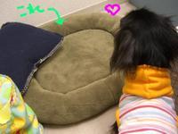Tsubasa_new_bed