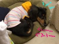 Tsubasa_new_bed2