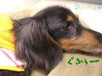Tsubasa_new_bed3