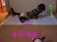 Tsubasa_pee