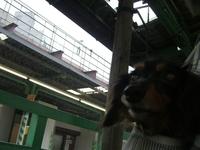 Tsubasa_train1
