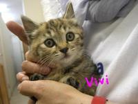 Vivi1