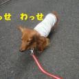 Minami0502_1