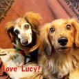 Lucy_ricky0111_3
