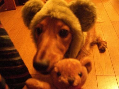 Ricky_bear1